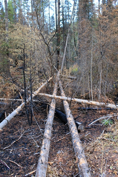 Burned log under unburned logs. Picture taken 10/11/17 about 50 yards up the trail from the Morrell Falls trailhead looking east.