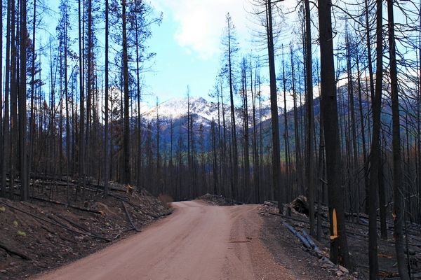 View of the Swan Range along FR 4353 traveling north from Seeley Lake, Montana.  As a result of the fire, the distant views are no longer obscured by trees.
