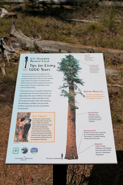 Sign located next to 'Gus', the largest and oldest Western Larch tree in the world.