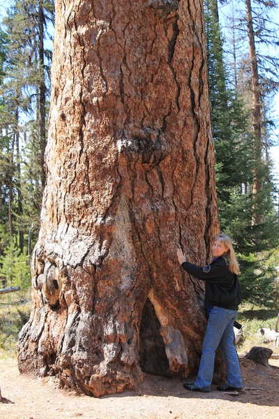 Standing next to 'Gus', the largest and oldest Western Larch tree in the world.