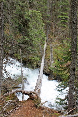 Fallen tree across the top of lower Morrell Falls (near Seeley Lake, MT)