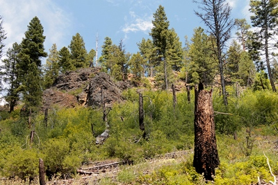 In 2000, the Monture fire burned almost 24,000 acres at the head of Monture Creek.  This view is looking northeast from the trail about 1.25 miles into the hike.