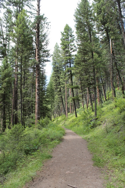 Hiking along about a half mile into the Monture Creek Trail in Powell County western Montana north of Ovando