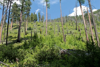 The Monture fire burned almost 24,000 acres at the head of Monture Creek in 2000, spilling over Hahn Pass