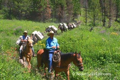 Horse-mule pack train returning from the Bob Marshall Wilderness on Pyramid Pass Trail 416, Seeley Lake, MT 7/21/19