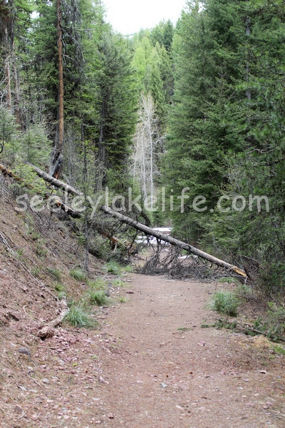 Pyramid pass trail (416) blocked by fallen trees and the snow beyond on May16, 2017 near Seeley Lake, MT