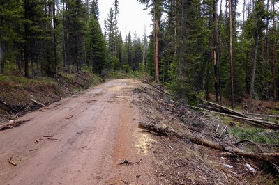 Forest Road 4353 on May 1st, 2017.  Lots of trees have been cut to clear the way to Morrell Falls Trailhead, however the road became impassable because of snow after driving about 4 miles.