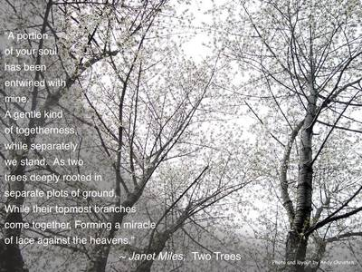 Two Trees by Janet Miles - Aportion of your soul has been entwined with mine. A gentle kind of togetherness.