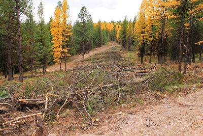 A fuel break... a line of cut trees to slow the spread of fire along FR4361 as it appeared on 10/18/17.  This area along the road did not burn in the Rice Ridge fire.