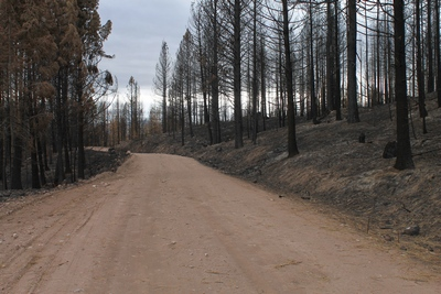 Looking west at a burned area along FR4361 as it appeared on 10/18/17.