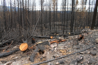 Looking southeast along FR4361 at a burned section on 10/18/17.  Trees were cut to fall away from the road to slow the spread of the fire.
