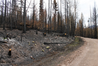 Looking east along FR4361 at a burned section on 10/18/17