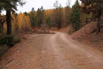 Looking west at an unburned area along FR4361 as it appeared on 10/18/17.  The picture to the right shows what it looks like (burned) when you turn the camera around.