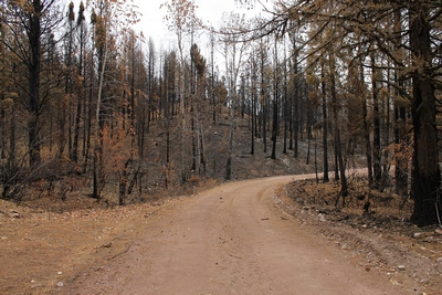 Looking east at a burned area along FR4361 as it appeared on 10/18/17.  The picture to the left shows what it looks like (unburned) when you turn the camera around.