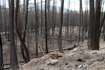 Looking southeast along FR4361 from a burned section on 10/18/17.